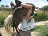 Horse male anal sex